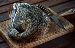 Canard tué avant la cuisson photo libre de droits