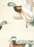 Canards. Image libre de droits