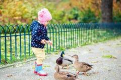 Canards alimentants de fille Photo libre de droits