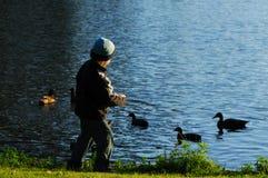 Canards alimentants de jeune garçon Photo stock