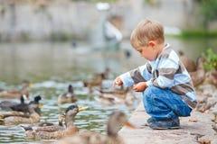 Canards alimentants mignons de petit garçon image libre de droits