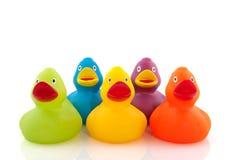 Canards colorés Photographie stock libre de droits