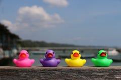 canards colorés en caoutchouc Photos stock
