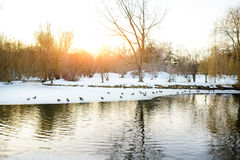 Canards dans l'étang et la neige au parc en hiver Images libres de droits