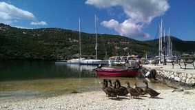 Canards dans la baie de Sivota Photo stock