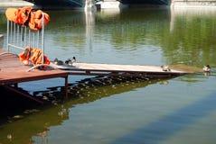 Canards dans le lac Photo stock