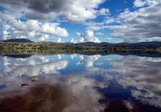 Canards dans le lac Eske, Co Le Donegal, Irlande Photographie stock libre de droits