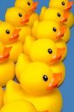 Canards dans une ligne Image stock