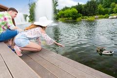 Canards de alimentation de jeune femme dans un étang Photo libre de droits