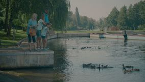 Canards de alimentation de famille multi de génération en parc banque de vidéos