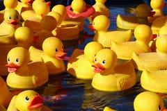 Canards en caoutchouc Image stock