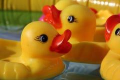 Canards en caoutchouc Photographie stock