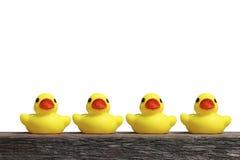 Canards en caoutchouc jaunes Photos stock