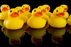 Canards en caoutchouc jaunes dans les lignes Photo stock