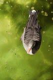 Canards en parc Image libre de droits
