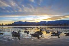 Canards et coucher du soleil images stock