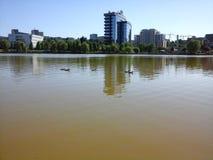 Canards et lac Image stock