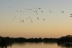 Canards et oiseaux volant au lever de soleil au-dessus de l'eau Images libres de droits