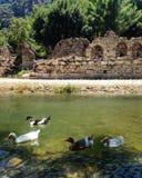 Canards et ruines Photo stock