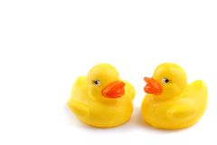canards humides Photographie stock