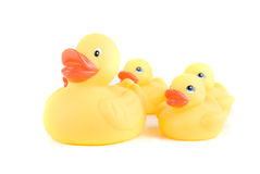 Canards jaunes Image stock