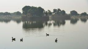 Canards nageant sur l'?tang photo stock