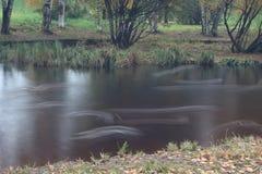 Canards rapides Image libre de droits