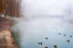 Canards sauvages sur une rivière brumeuse Image libre de droits