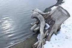 Canards sur le fleuve Image stock