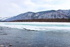Canards sur le fleuve Images libres de droits