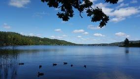 Canards sur le lac Photos stock