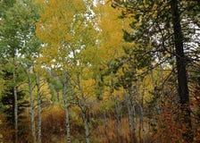 Canari coloré d'automne ! photos libres de droits