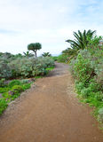 Canarian footpath Stock Photography