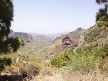 Canarian mountain vegetation , Spain Royalty Free Stock Image