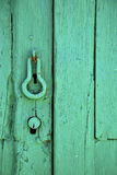 Canarias  brown knocker in a green Stock Photo