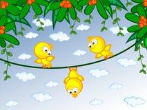 Canaries auf Zweig Lizenzfreie Stockfotos