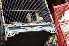 Canaries in a cage. In the peruvian market royalty free stock photo