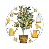 Canaries and citrus plant.Vector sketch  illustration. Royalty Free Stock Image
