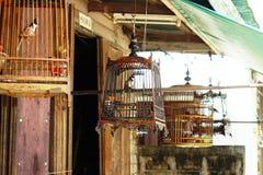 Canaries nas gaiolas fotos de stock royalty free