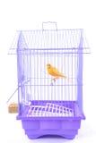 Canarino nella gabbia immagini stock libere da diritti
