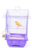 Canarino nella gabbia immagine stock