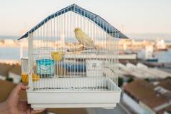 Canarino in una gabbia fotografie stock
