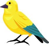 Canary bird. Yellow canary bird vector illustrated Royalty Free Stock Image