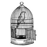 Canary bird in cage engraving vector illustration Stock Photos