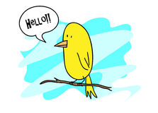 Canary Bird Stock Image