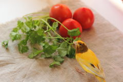 Canary bird. Pet canary tries cilantro to taste. soft focus stock photo