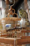 Canary Bird. A Canary Bird sitting in it's cage in one of the small streets of Zhujiajiao, China Stock Photo