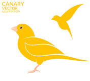 Canary bird Royalty Free Stock Images