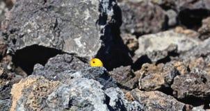 Canary bird Royalty Free Stock Image
