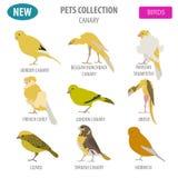 Canary breeds icon set flat style isolated on white. Pet birds c Royalty Free Stock Photo
